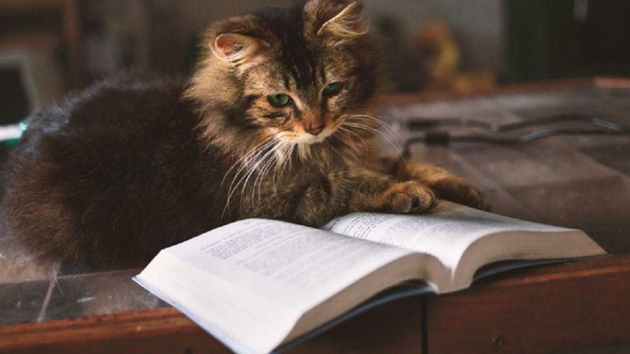 読書が副業になる?自分の感想をお金に変える8つの方法